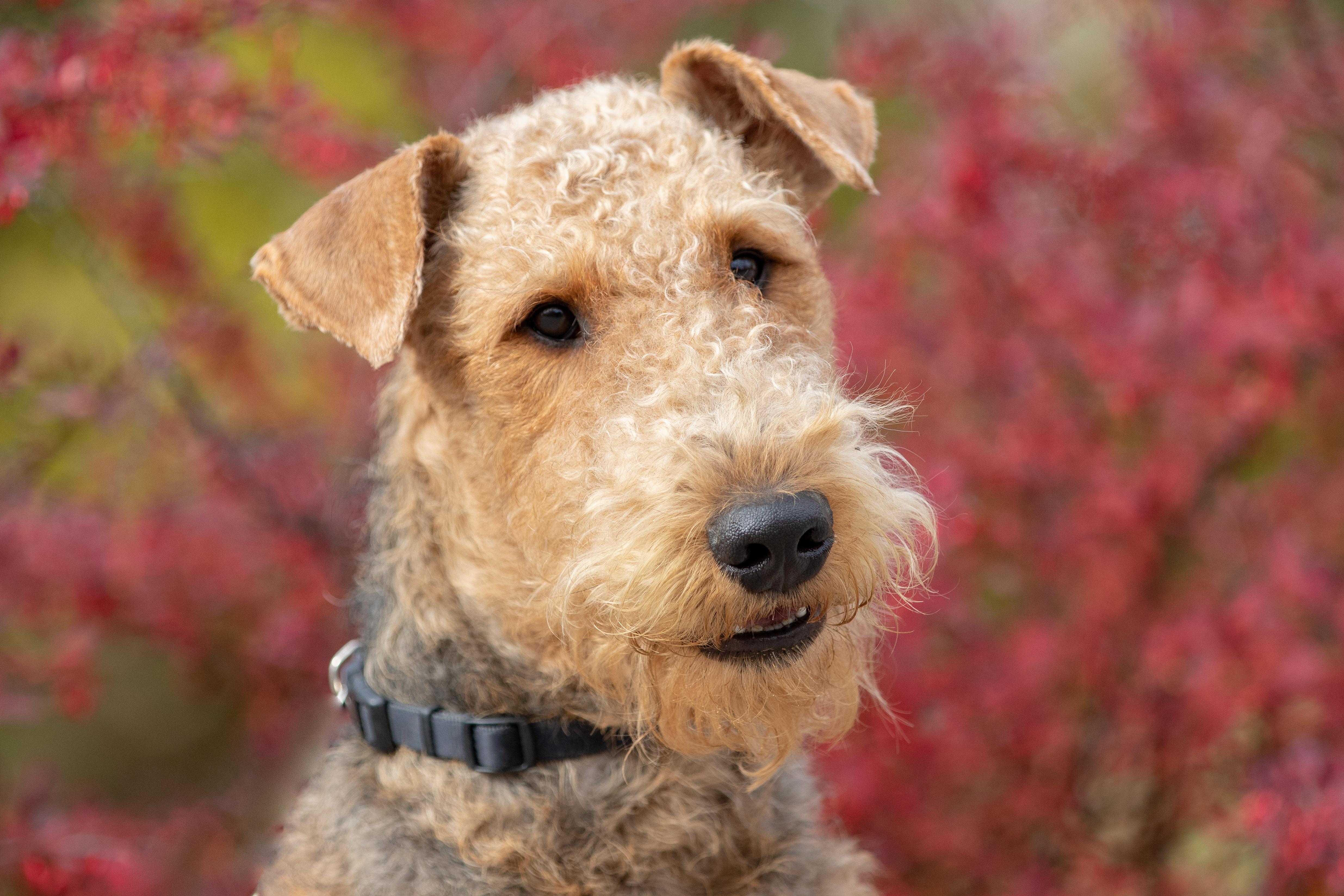 grujot1-caninez